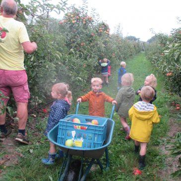 P : appels plukken bij boer Jan in Vremde
