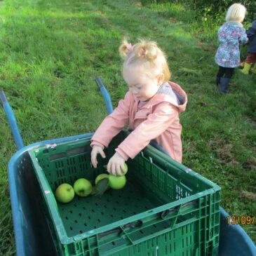 P : Appels plukken bij boer Jan te Vremde